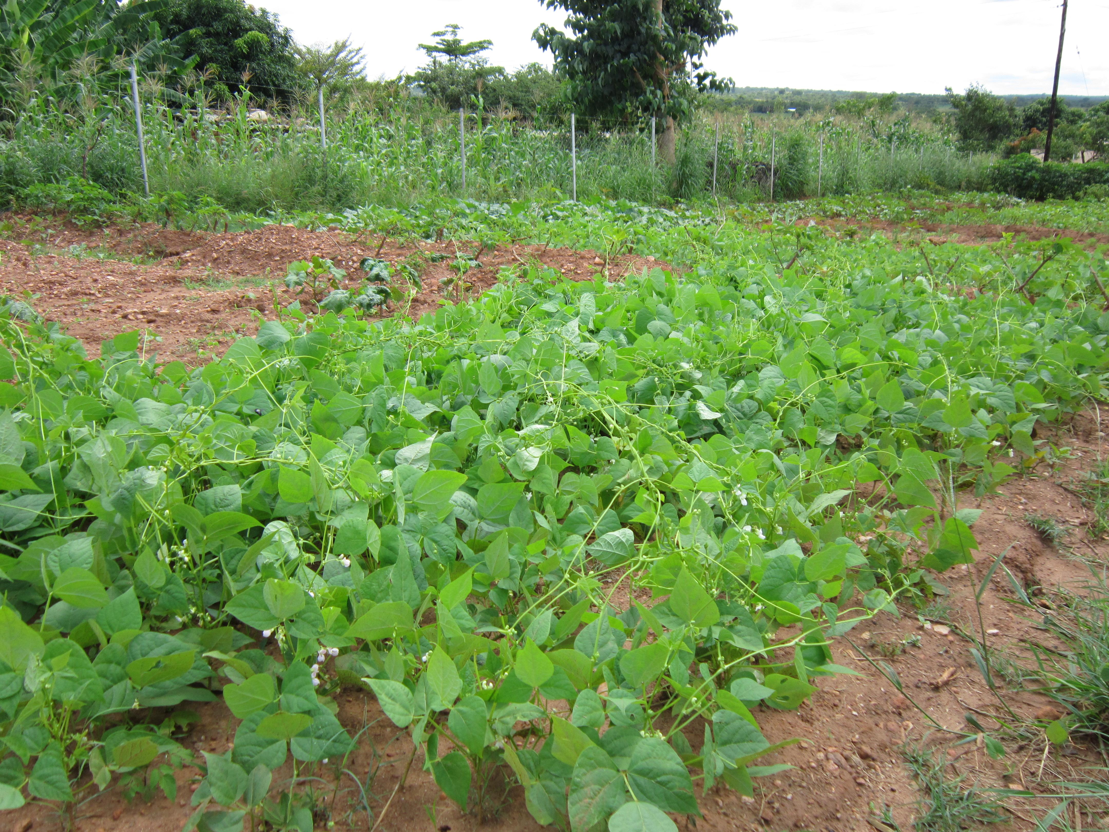chongwe - Farming God's way