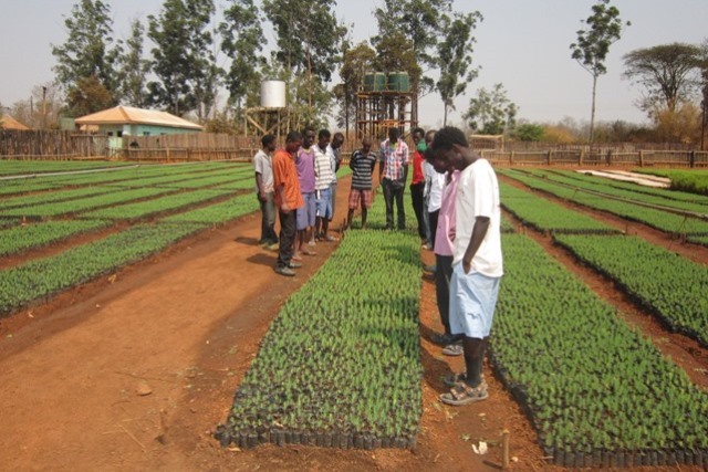 VOH Kitwe - timber plantation